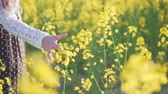 рапсовое : A girl stroking flowers on a rapeseed field