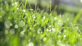 penge : Drops of water on the grass. Morning dew. Blurred Background Stock mozgókép