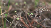 para cima : Buds sprout on the branches