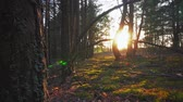 ladrão : The sun through the trees in the forest at sunset Stock Footage