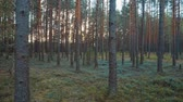 высокий : Walk in the woods at sunset.
