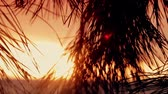 textura : branches of trees at sunset in the coniferous forest Stock Footage