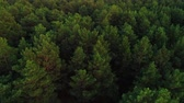 vale : Autumn forest at sunset from a birds eye view