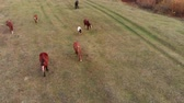 cval : Aerial shot. Herd of horses in the autumn meadow by the river.