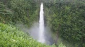 гавайский : Akaka Falls State Park is a state park on Hawaii Island. Стоковые видеозаписи