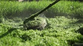worker mows green grass manual lawnmower on spring day Stock Footage