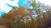pontos : Autumn POV driving shot of the Blue Ridge Parkway through North Carolina at sunset Stock Footage