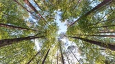 листва : Rotating timelapse of the canopy of a forest in North Carolina