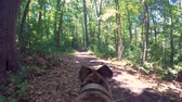 pontos : Point of view shot of a greyhound dog on a forest trail