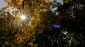 backlight : Sun shines rays through tree leaves