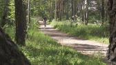 ciclismo : The athlete man drives through the forest on a bicycle. Healthy lifestyle. Stock Footage