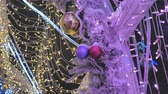 süsleme : Christmas balls close-up. toys hanging on the tree. The city is decorated for the holiday. Colored garland