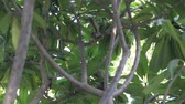 tailândia : Squirrel on the tree Stock Footage