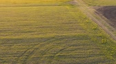 Aerial view field. close-up. agriculture