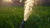 springtime : Watering of garden backlit by warm sunset light. Green grass backlit. Watering lawn Stock Footage