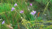 guloseima : Wild flowers and feather-grass flicker in the wind, wild step