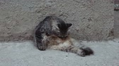 piekne : Young lady-cat grooming outside on a concrete surface near wall Wideo