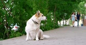 постоянный : White dor sit on ground and looking at walkers