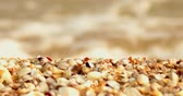 ハマグリ : Coastal zone macro. Cover of shells on forefround defocused sea surf on background