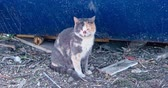 guba : Senior calico cat sitting on littered ground near blue trash Stock mozgókép