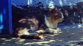 hora de dormir : Old tom cat resting in shadow nea wall in the middle of the day