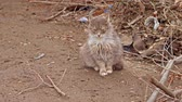 poesje : Cute fluffy cat ioutdoors sitting on bare ground
