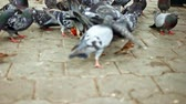 kismadár : Birds fight for dry broad in park