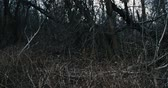 madeira de lei : Panoramic view in dark forest at mess of dead branches POV Stock Footage