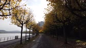 gyalogút : Bonn Germany, 06 November 2019: POV of riding on bicycle on bicycle lane of Rhine embankment with autumnal trees on both sides 4k 50fps clip Stock mozgókép