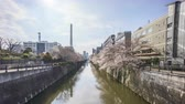 virágzik : Time lapse of bright day light at Meguro River, Tokyo during full bloom cherry blossom. Pan left