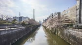 時間 : Time lapse of bright day light at Meguro River, Tokyo during full bloom cherry blossom. Tilt down