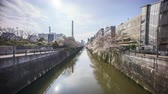 Time lapse of bright day light at Meguro River, Tokyo during full bloom cherry blossom.