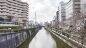 река : Time lapse of bright day light at Meguro River, Tokyo during full bloom cherry blossom. Pan left