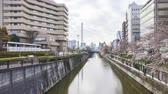 Time lapse of bright day light at Meguro River, Tokyo during full bloom cherry blossom. Pan right 動画素材