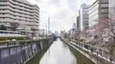 Time lapse of bright day light at Meguro River, Tokyo during full bloom cherry blossom. Tilt down