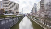 Time lapse of bright day light at Meguro River, Tokyo during full bloom cherry blossom. Zoom in