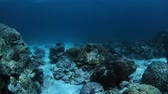 океан : Underwater sea bottom with rocks on a sandy bottom and coral reef
