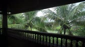 rega : Rain in a tropical garden Stock Footage