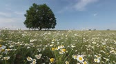 nobody : Summer tree with flowers on a meadow. Focus on the foreground