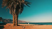 temporadas : Palm tree on the coast of the Red Sea. Town of Dahab, Egypt