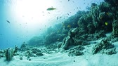 czerwony : Coral reef with fish underwater. 300 faster