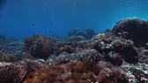 рыба : Underwater coral reef in tropical clear sea