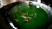 красочный : Koi fish in the small round pool