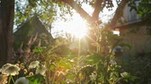 talos : Sunset in the garden through the flowers