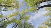 топ : An upward view of a tree and the sky