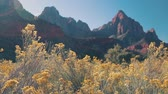 vermelho : The Zion National Park with plant on the foreground, USA. Hand held footage. Vídeos