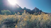 muro de pedras : The Zion National Park with plant on the foreground, USA. Hand held footage. Vídeos
