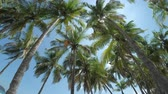 тропический : Palm trees on the beach. Camera moving up