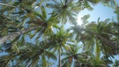 тропический : Palm trees on the beach with sky. Camera spins