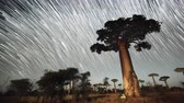universe : Timelapse of the starry sky like a comets with baobab tree, Madagascar